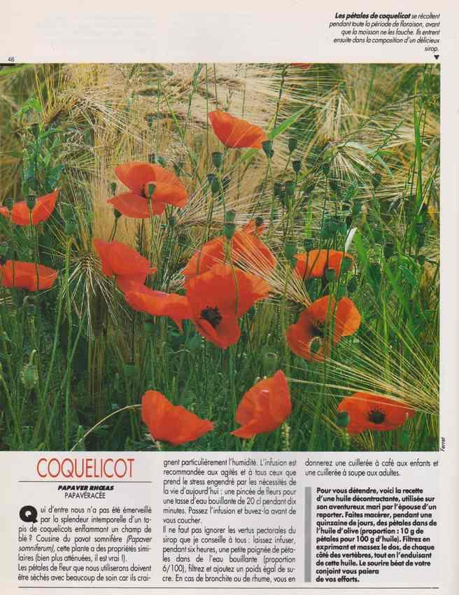 les plantes qui soignent - Page 15 6t10