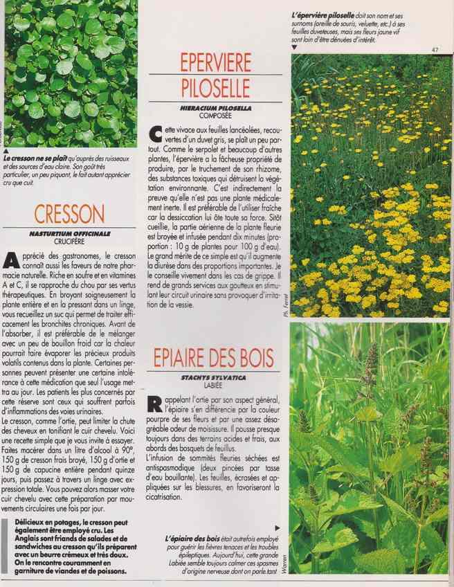 les plantes qui soignent - Page 15 6u10