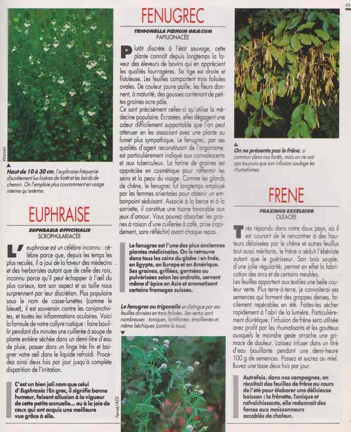 les plantes qui soignent - Page 15 6w10