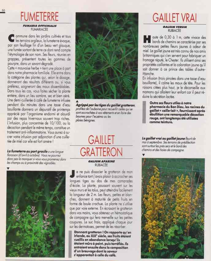 les plantes qui soignent - Page 16 6x10