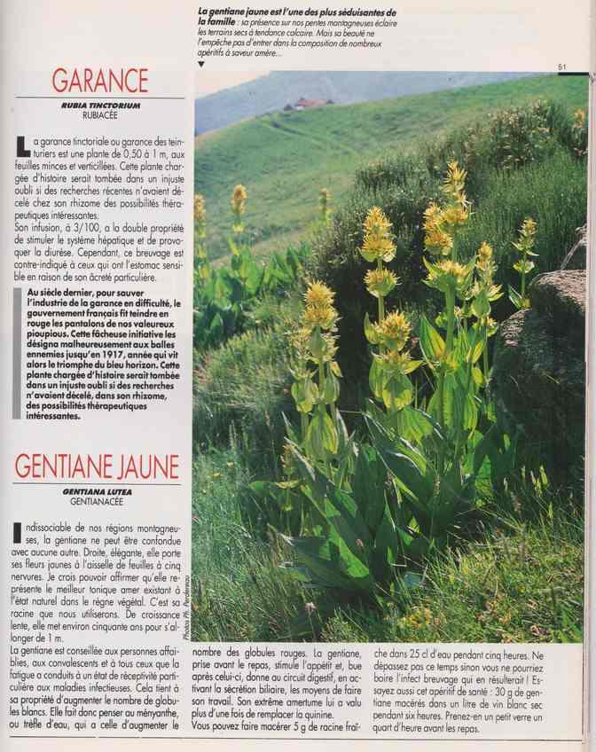 les plantes qui soignent - Page 16 6y10