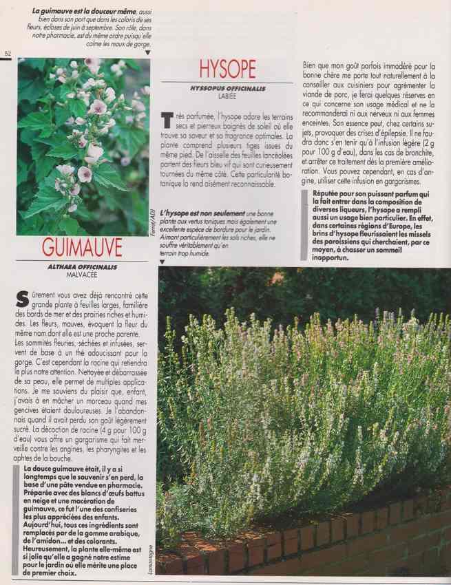 les plantes qui soignent - Page 16 6z10