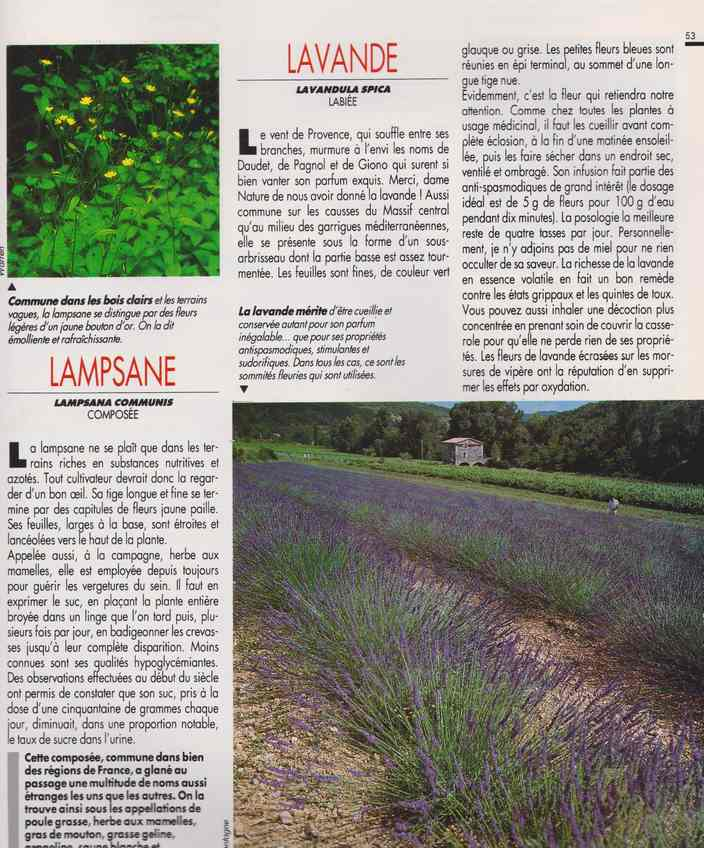 les plantes qui soignent - Page 16 726