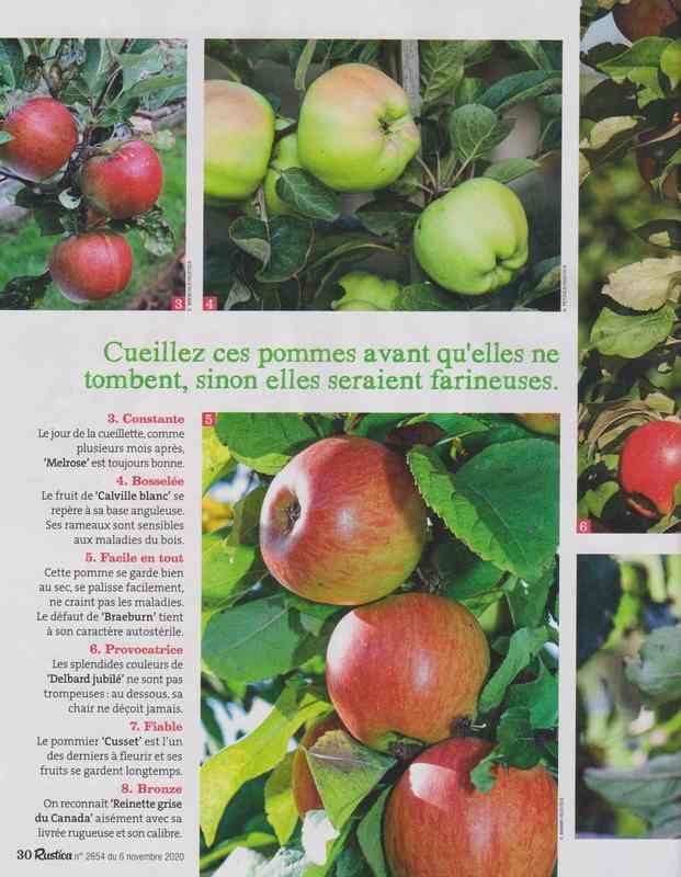 au jardin - Page 5 7a17