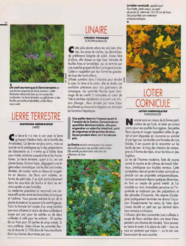 les plantes qui soignent - Page 16 7a20