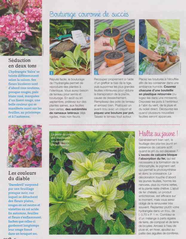 au jardin - Page 42 7b10