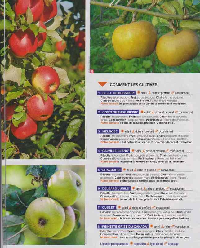 au jardin - Page 5 7b12