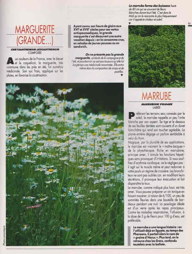 les plantes qui soignent - Page 16 7b14