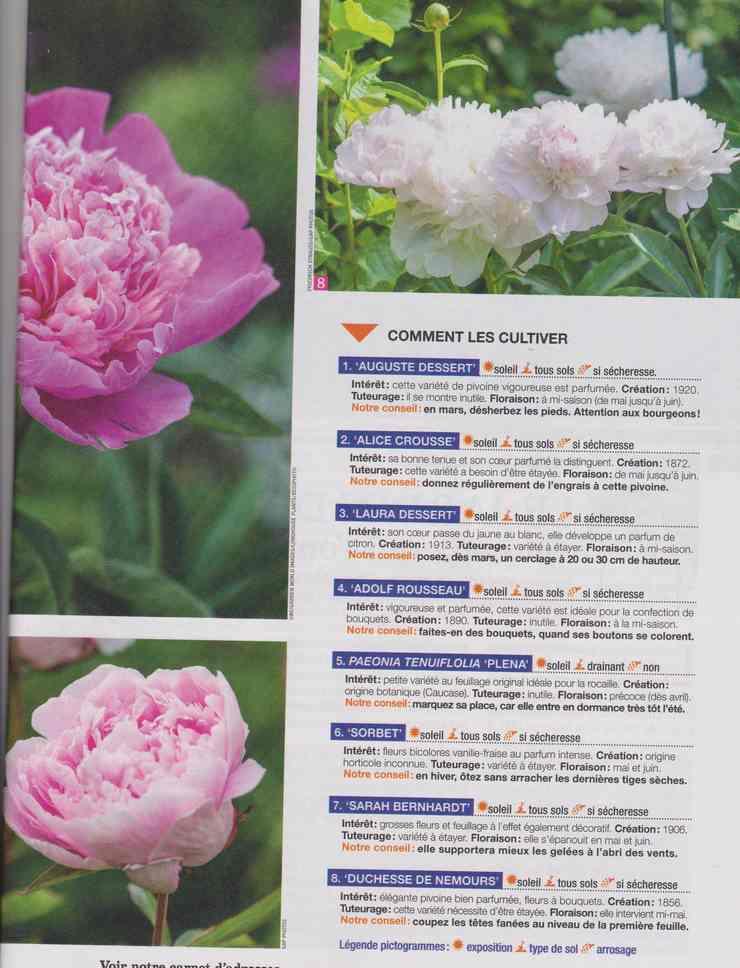 au jardin - Page 18 7b16