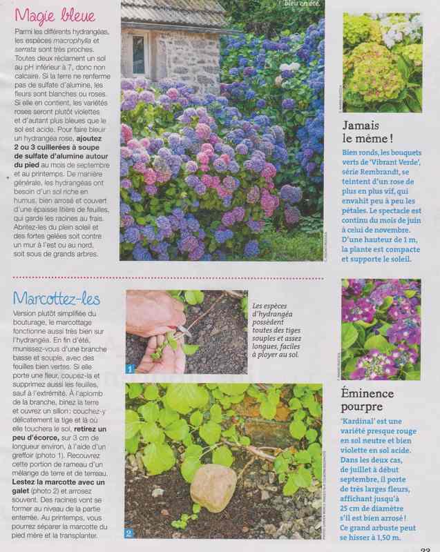 au jardin - Page 42 7c10