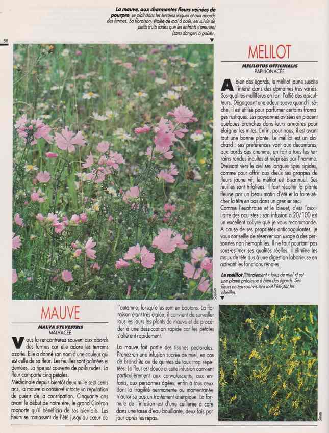 les plantes qui soignent - Page 17 7c15