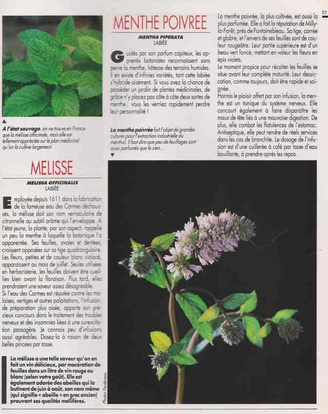 les plantes qui soignent - Page 17 7d13