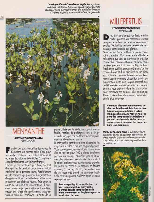 les plantes qui soignent - Page 17 7e12