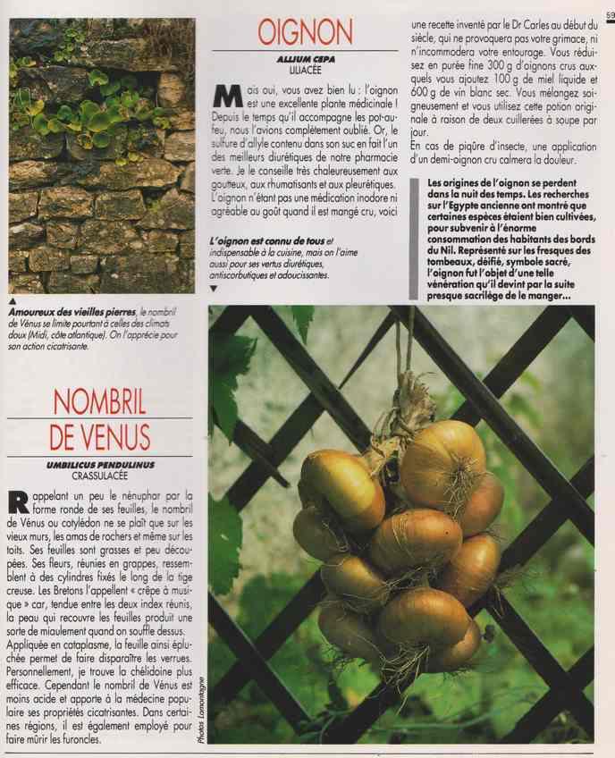 les plantes qui soignent - Page 17 7f13