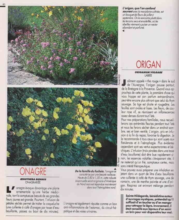 les plantes qui soignent - Page 17 7g12