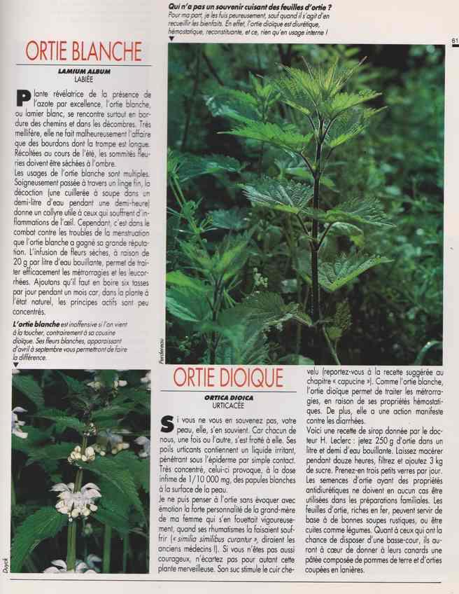 les plantes qui soignent - Page 17 7h12