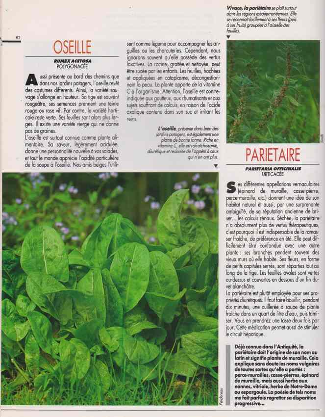 les plantes qui soignent - Page 17 7j10