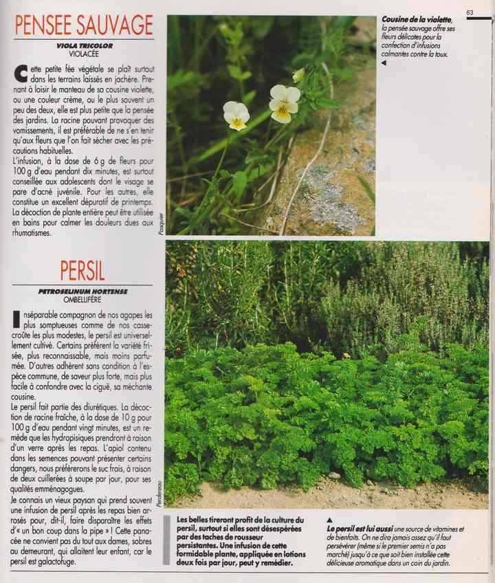 les plantes qui soignent - Page 17 7k10