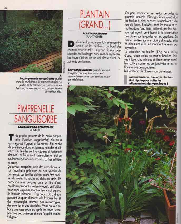les plantes qui soignent - Page 17 7m10