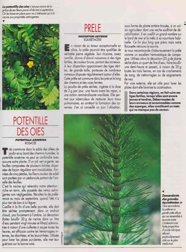 les plantes qui soignent - Page 17 7n10