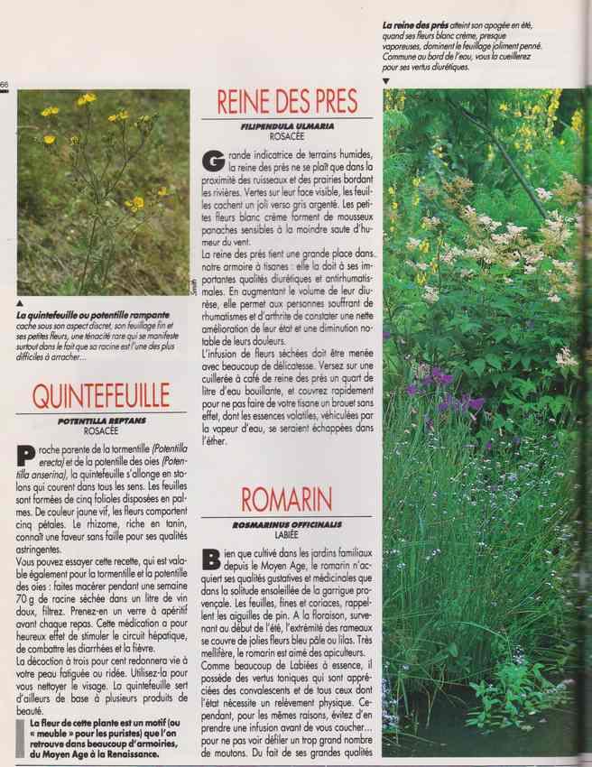les plantes qui soignent - Page 17 7o10