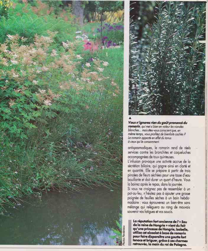 les plantes qui soignent - Page 17 7p10