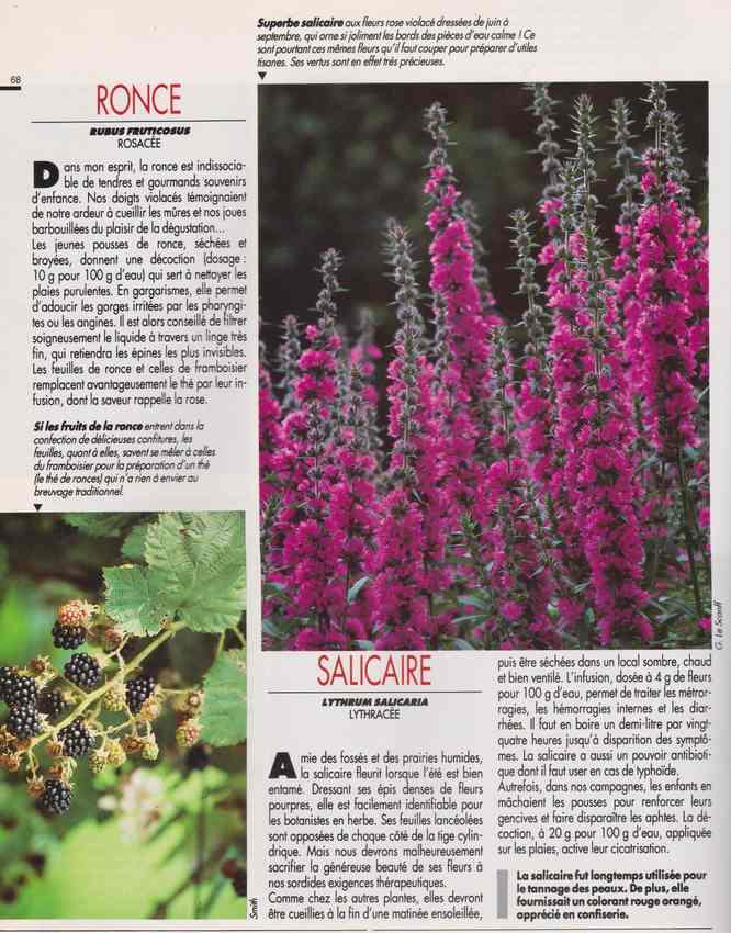 les plantes qui soignent - Page 17 7q10