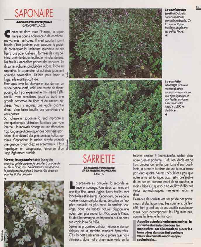 les plantes qui soignent - Page 18 7r10