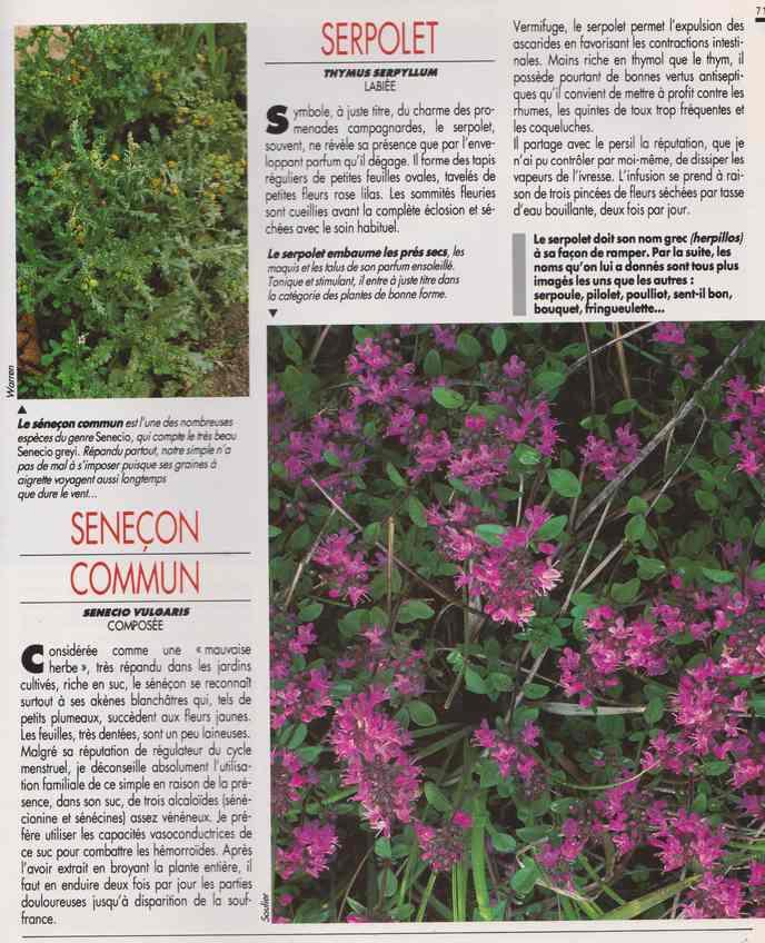 les plantes qui soignent - Page 18 7t10