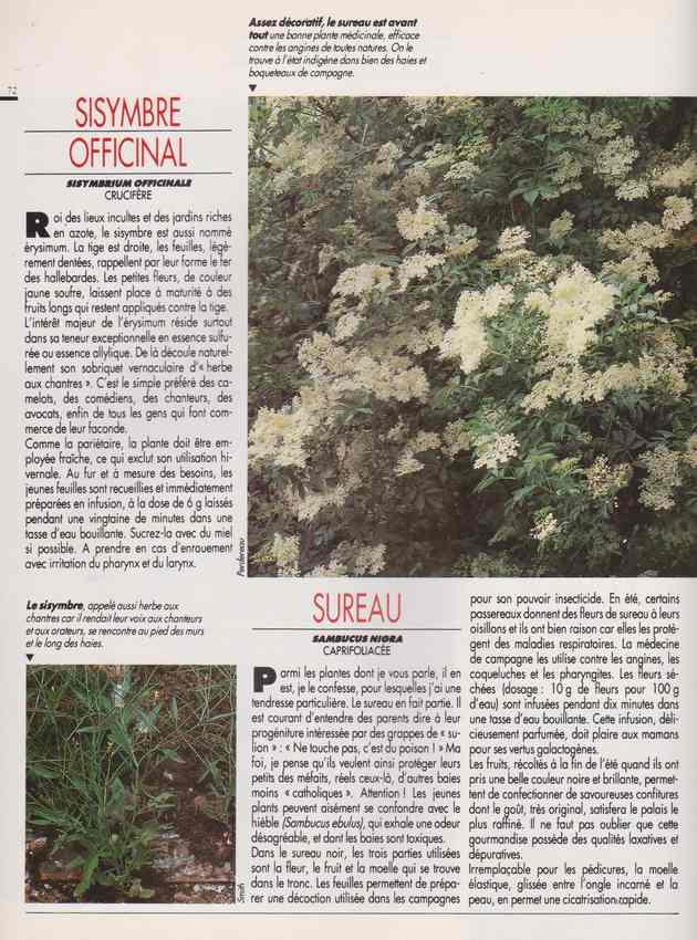 les plantes qui soignent - Page 18 7v10