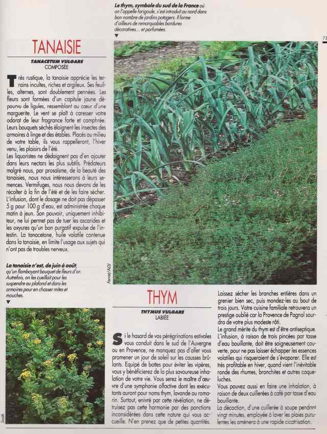 les plantes qui soignent - Page 18 7w10
