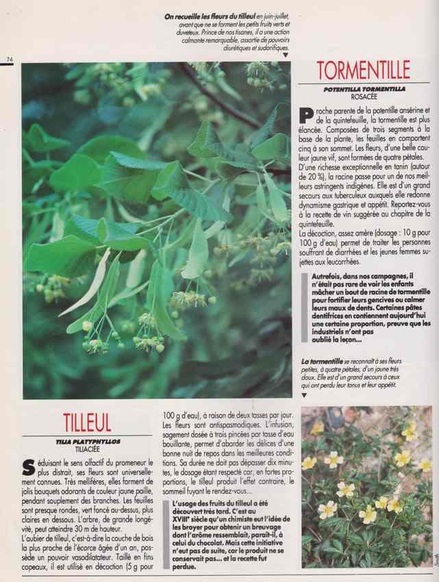 les plantes qui soignent - Page 18 7x11