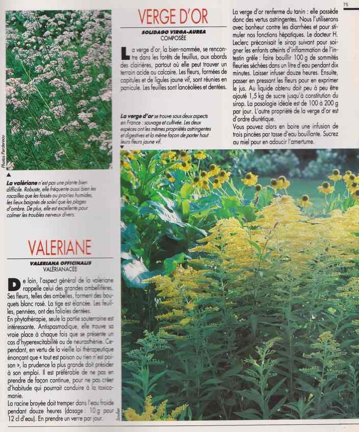 les plantes qui soignent - Page 18 7y10