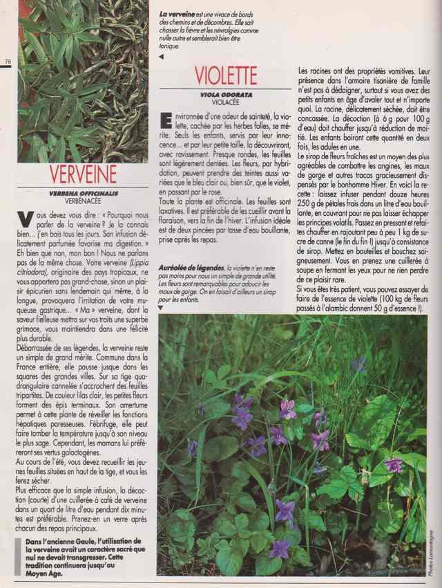 les plantes qui soignent - Page 18 7z10