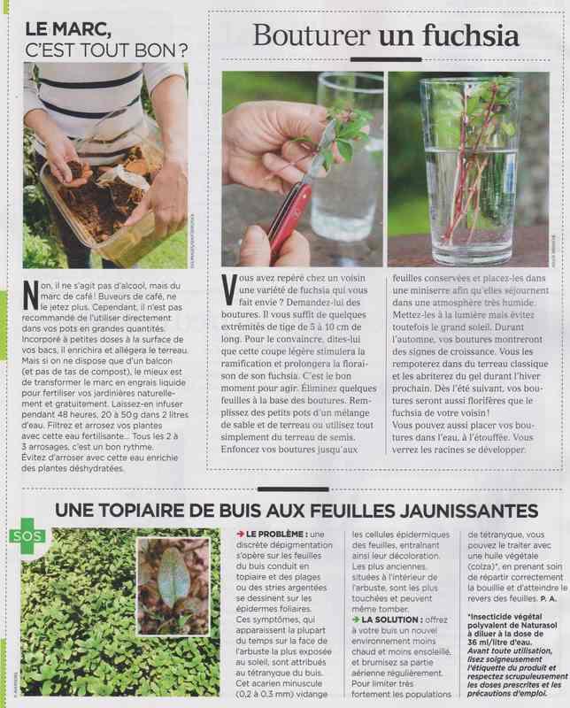au jardin - Page 37 812