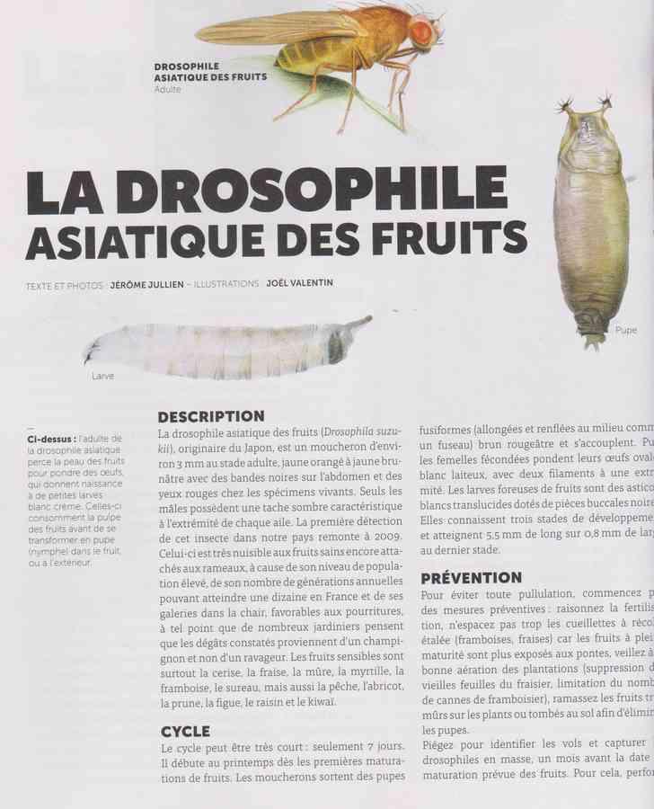 les bestioles - Page 2 813