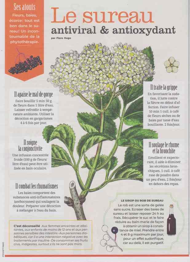les plantes qui soignent - Page 12 815