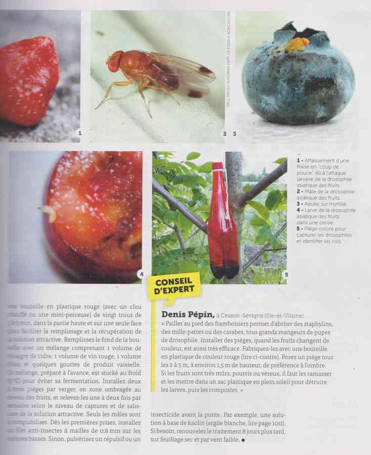 les bestioles - Page 2 8a10