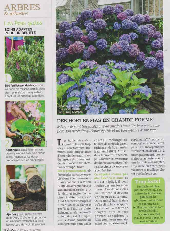 au jardin - Page 36 910