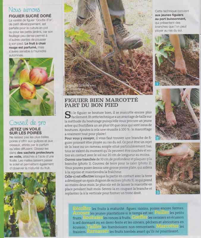 au jardin - Page 2 916