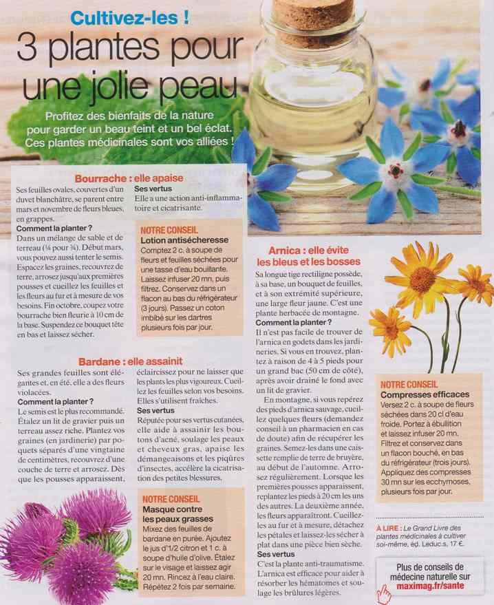 les plantes qui soignent - Page 19 925