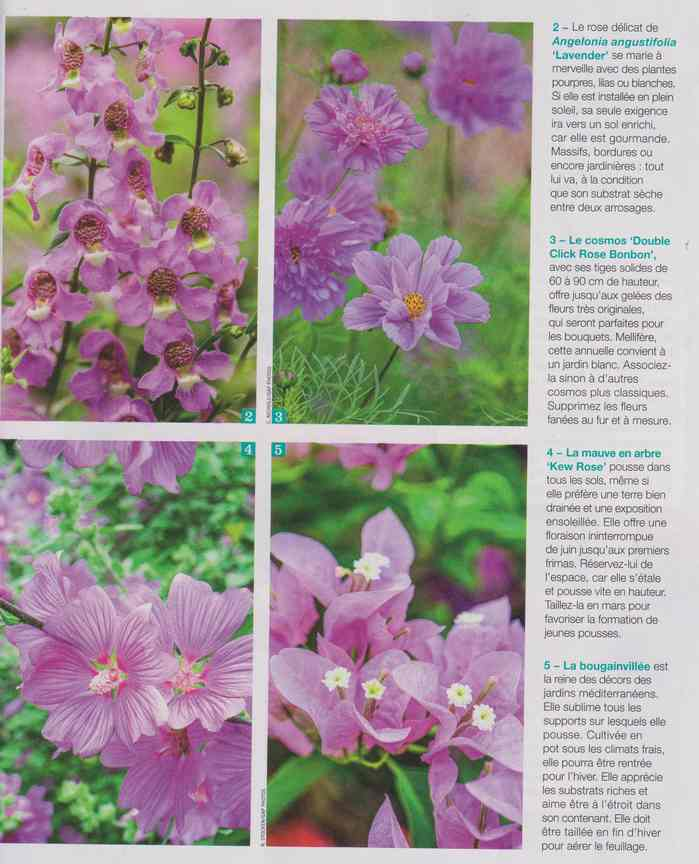 au jardin - Page 26 9a19