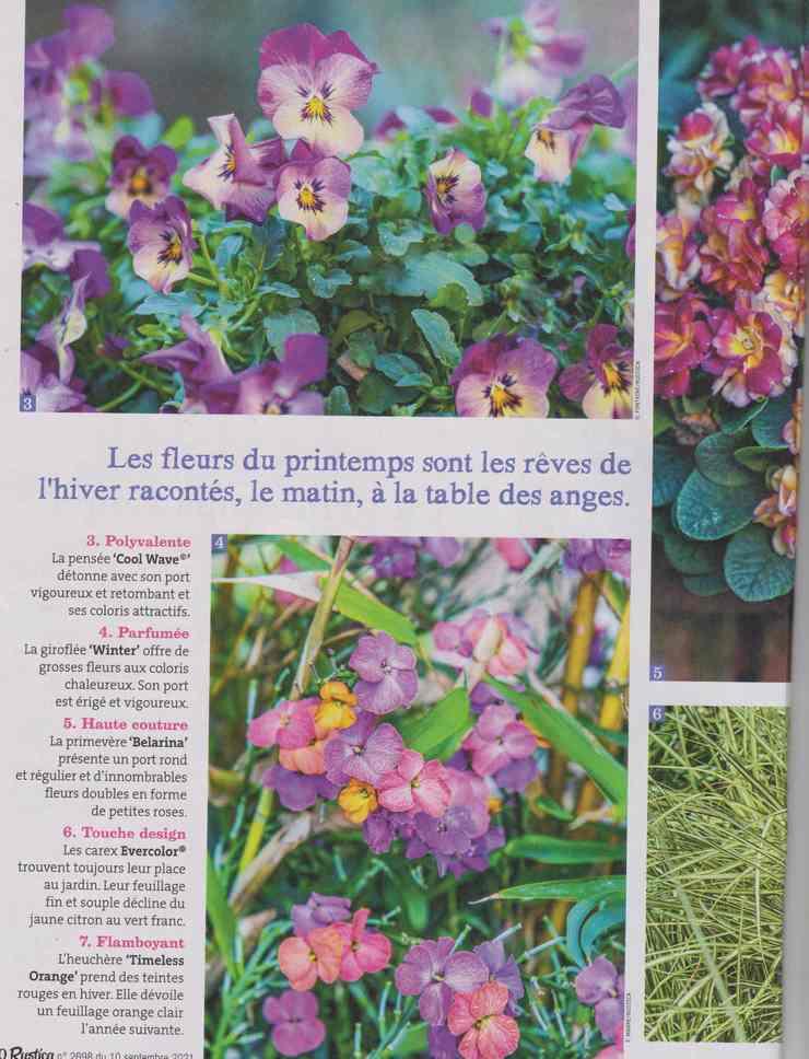 au jardin - Page 29 9a21