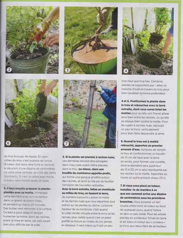 au jardin - Page 6 9b11