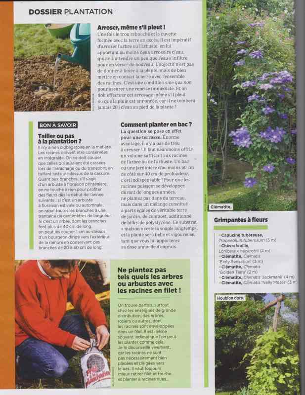 au jardin - Page 6 9c10