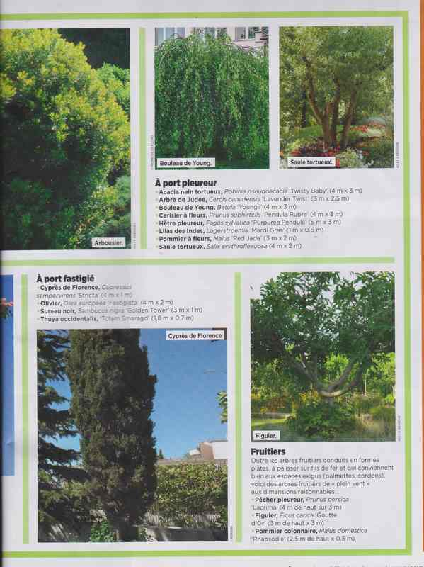 au jardin - Page 7 9f10