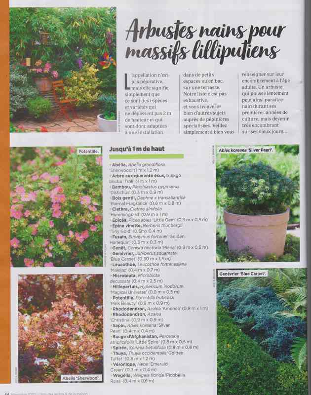 au jardin - Page 7 9g10
