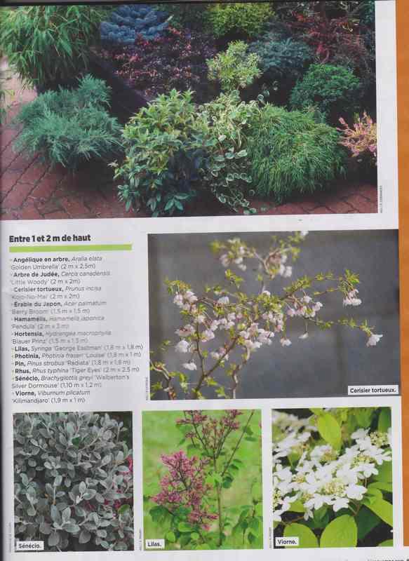 au jardin - Page 7 9h10