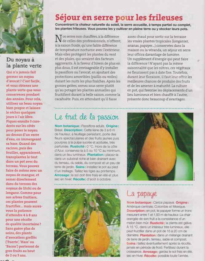 au jardin - Page 4 Image10