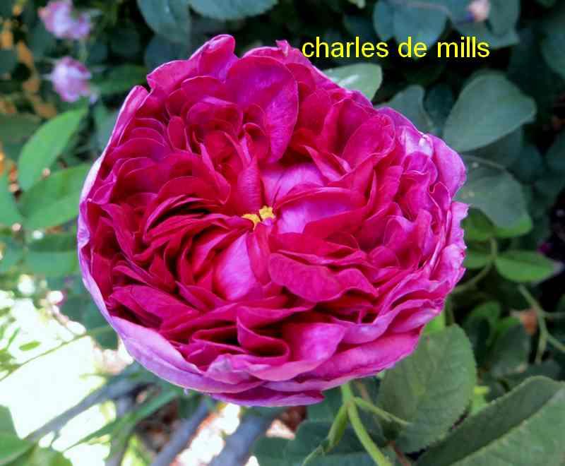 'Charles de Mills' ou 'Président de Sèze' !!! - Page 2 Img_5010